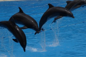 dolphins-2435325_1280