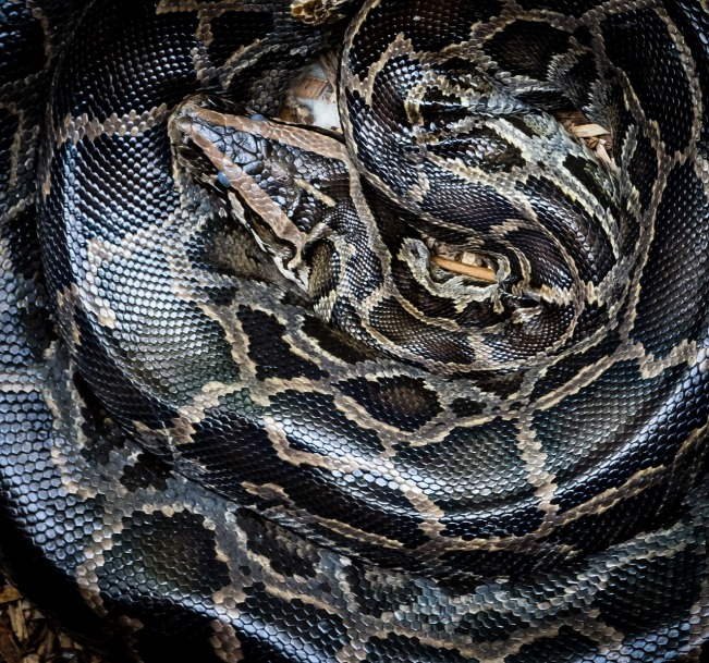 python-1958052_1280